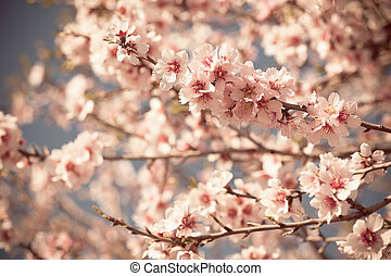 Pink Flowers Blooming Peach Tree at Spring Horizontal...