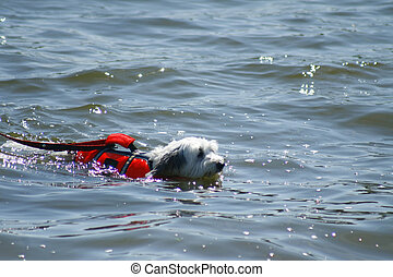 Dog swimming in water with life vest