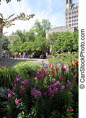 Alamo Garden - One of the many wildflower gardens located in...