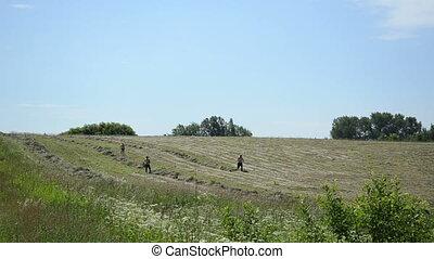 farm peasant rake hay - farm peasant workers rake dry hay...