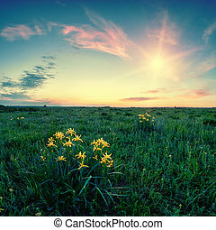 Flowers in a field at dawn - Bush of yellow flowers in a...