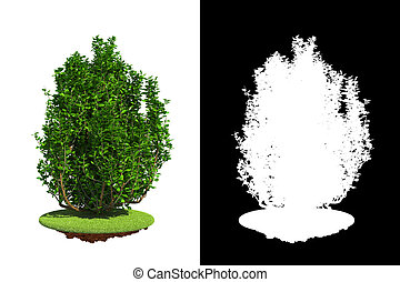Green Shrub with Detail Raster Mask. - Green Shrub Isolated...