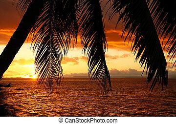 Silhouetted palm tree on a beach, Vanua Levu island, Fiji,...