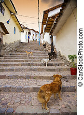 Cusco dogs - Typical street scene in the central part of...