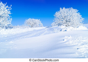 Snow-covered trees - snowy tree