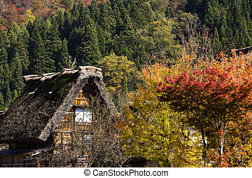 Cottage and rice field in small village shirakawa-go japan...