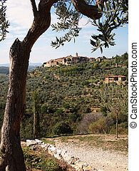 Tuscany landscape - Landscape in Tuscany with an olive tree,...