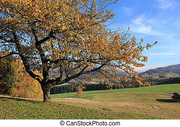 秋, さくらんぼ, 木