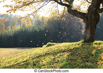 golden leaves fall down in a beautiful landscape with green...