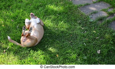 cute dog grass roll - Cute crossbreed bastard dog pet roll...