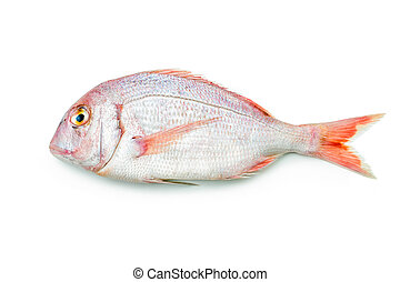 Red seabream - pink sea bream isolated on white background