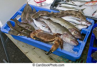 fish market - fresh fish on the dutch fishmarket in volendam