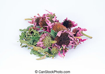 Dried echinacea purpurea in white background