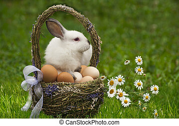 Easter basket and the Easter bunny - Easter basket with eggs...