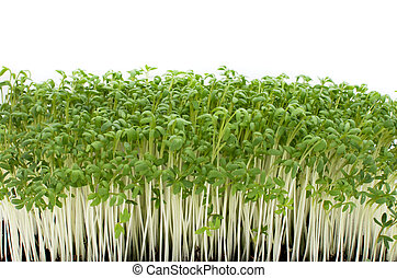 Watercress - Fresh watercress with ground isolated on white...