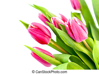 Pink tulip decoration placed on white background
