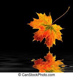 秋天, 葉子, 美麗