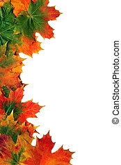 Maple Leaf Border - Maple leaf abstract design forming a...