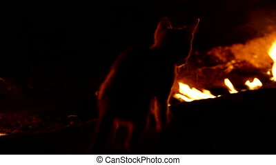 Cat-firefighter - Cat playing with fire. Night mode. Canon...
