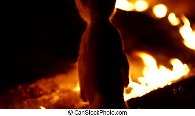 Fire Cat - Cat playing with fire. Night mode. Canon 5D Mark...