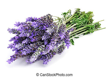 lavender flowers - a bunch of lavender flowers on a white...