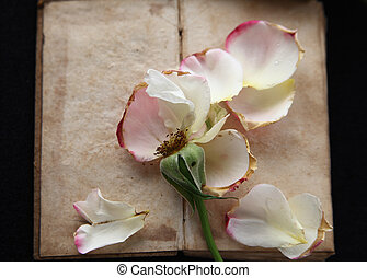 Vintage book with rose petals
