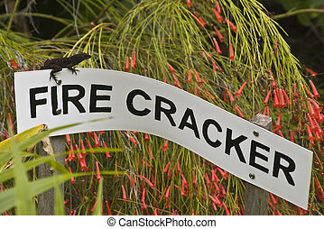 Sign and Lizzard - Small lizzard sitting on a sign in a...