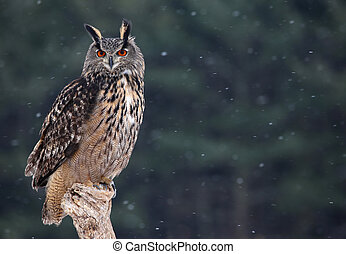 Majestic Eurasian Eagle-Owl - A Eurasian Eagle Owl (Bubo...