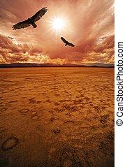 Desert and Vultures Dry Lakebed Desert Scenery