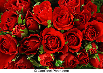 Roses background - Red roses background - natural texture of...