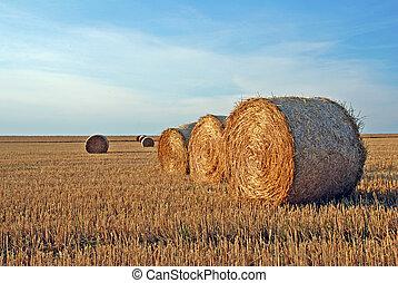 campo, después, cosecha