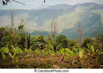 Beautiful view from the mountain in Samui island - view from...