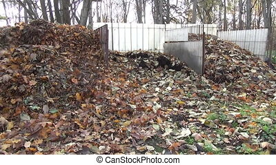 compost leaves pile - garden compost mulch leaves