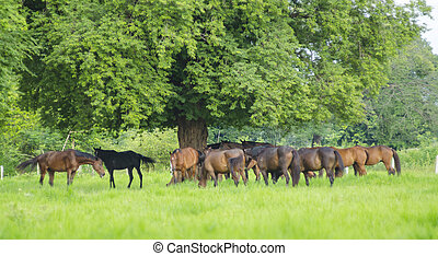 horses on green meadow in spring