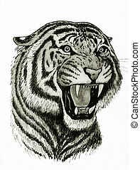 bengal tiger face - drawing of roaring bengal tiger