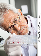 Researcher Analyzing Microtiter Plate