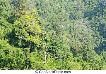 verde, foresta