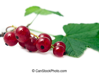 juicy currant - sprig of red currant on a white background