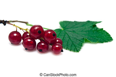 sprig of red currant on a white background