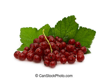 red garden-stuffs of currant - sprig of red currant on a...