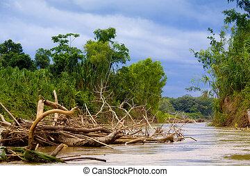 Manu River - Driftwood in Manu River. Manu National Park,...