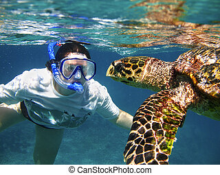 Close encounter - A snorkeler swims with Hawksbill sea...