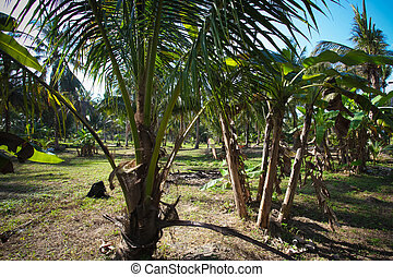 Coconut trees in the jungle
