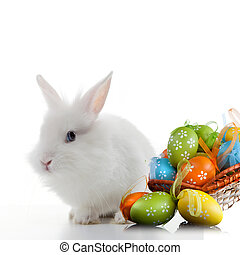 Rabbit and color easter eggs in basket isolated on white