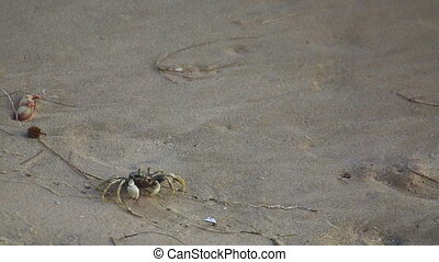 Little crab - Crab crouching on the sand