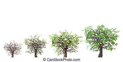 Tree evolution - Evolution of a tree at various stages of...