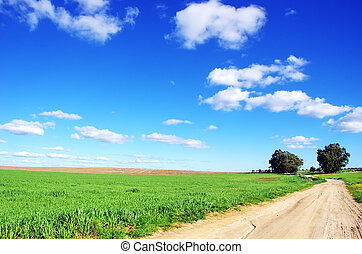 Old road in agricultural field
