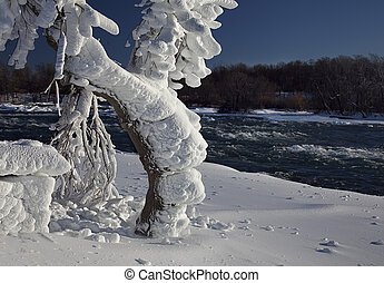 Tree Loaded with Rime Ice on Niagara River