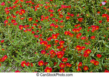 Beautiful colorful flowers in the garden.