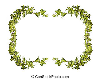 ivy frame isolated on white background